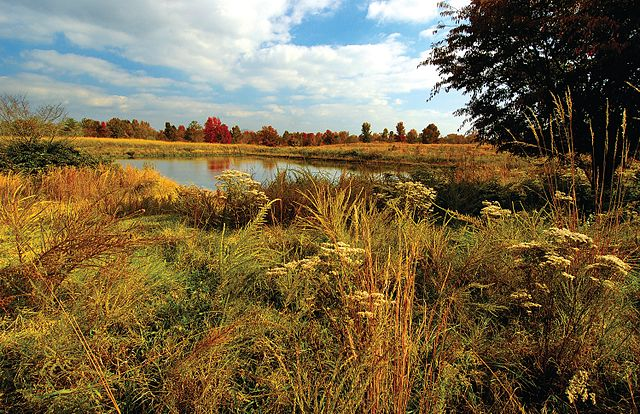 Woodbridge is home to many parks and nature trails