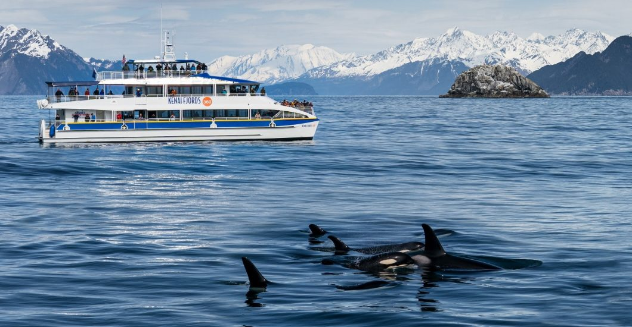 Major marine tours in Seward, Alaska