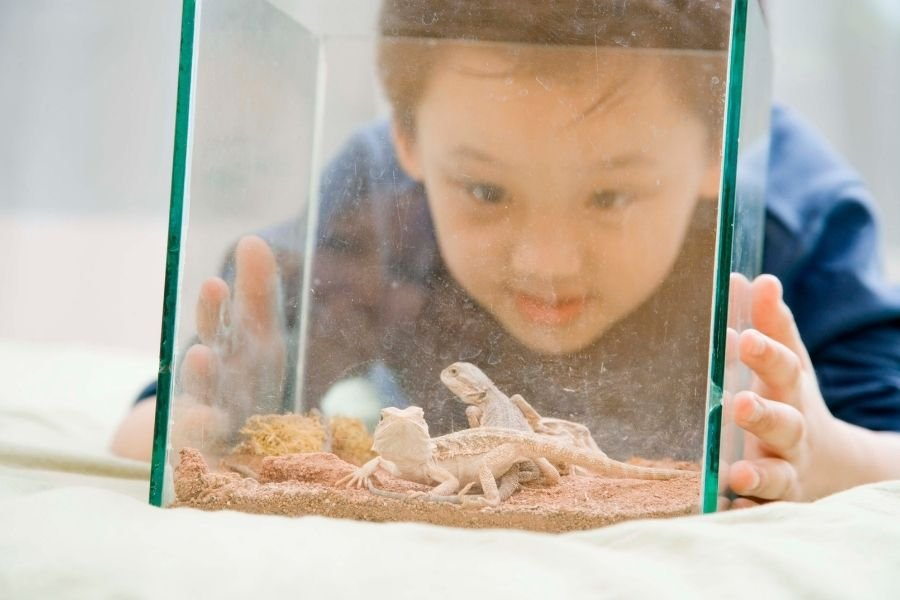 boy with pet lizards