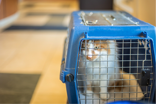 Plan ahead if you're moving your pet to Japan.