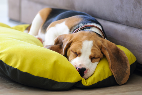 Create a safe place for your pet to retreat during the holidays.