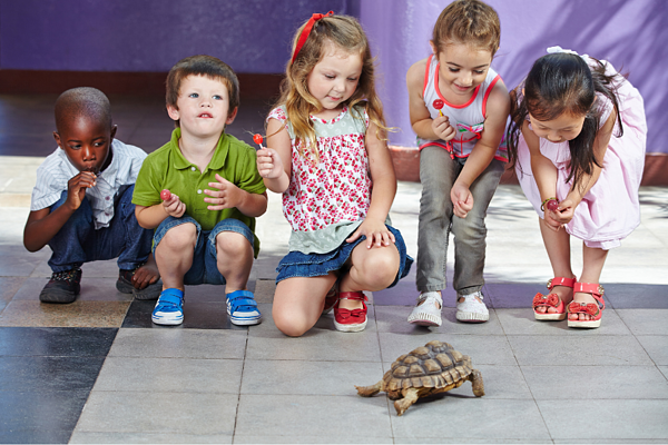 Is your exotic pet allowed in military housing?