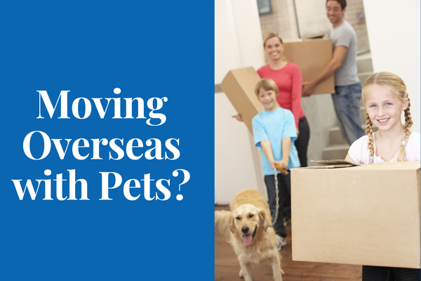 Moving Overseas with Pets_ (2)