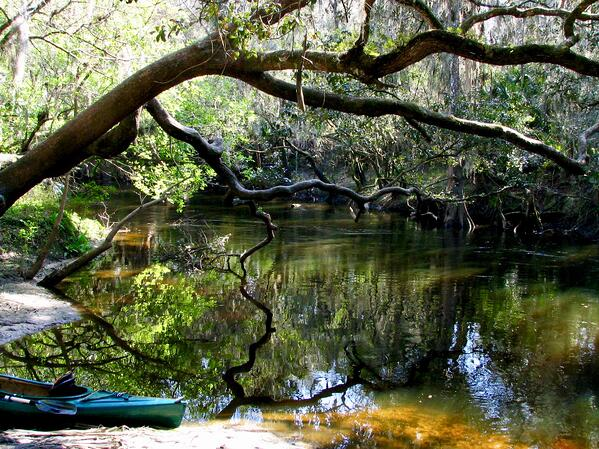 Alafia_River_near_Lithia_Springs_Park 2
