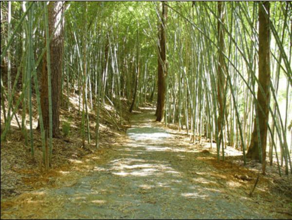 Prattville Wilderness Park