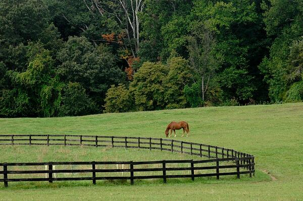 Visit the Stables at Meadowood near Fort Belvoir.
