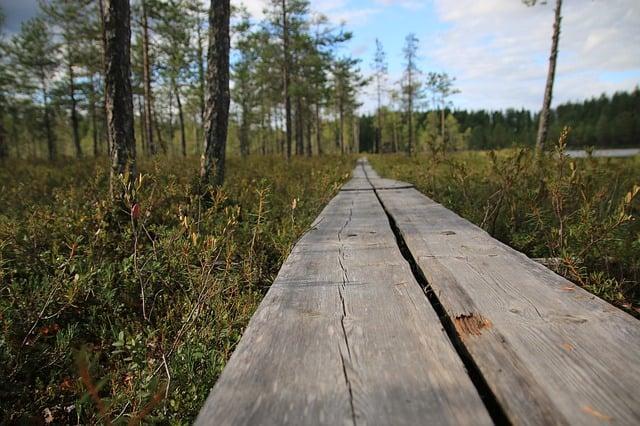 nature_trail.jpg