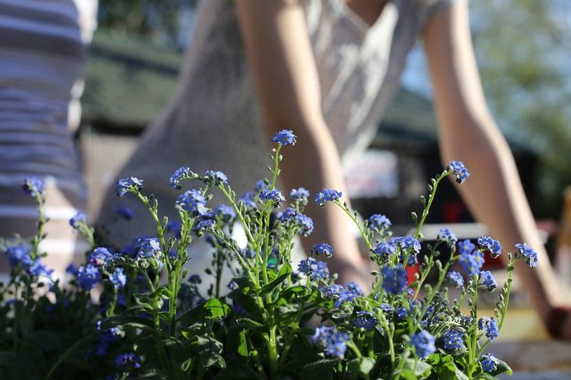spring-garden-1219823_1280.jpg
