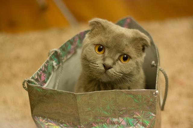 cat_bag.jpeg