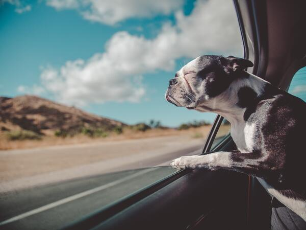 Use Pinterest to Research Traveling with Pets