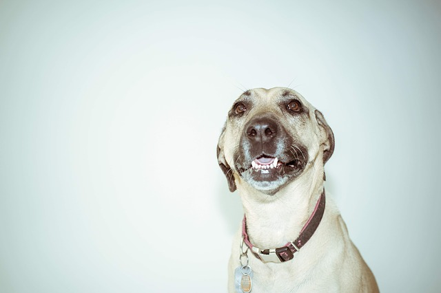 dog with collar.jpg
