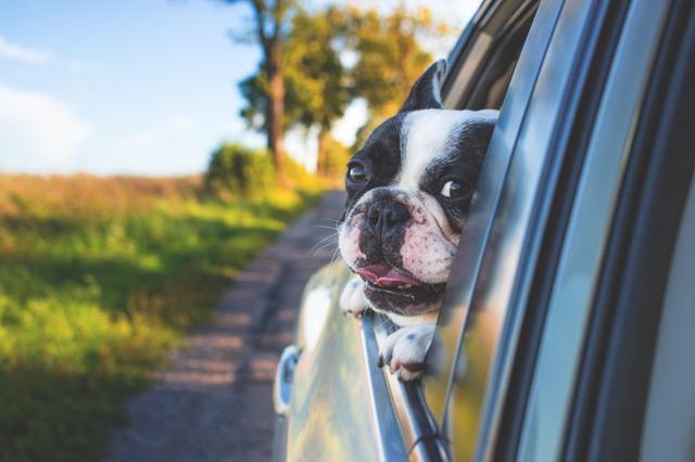 dog_window.jpeg