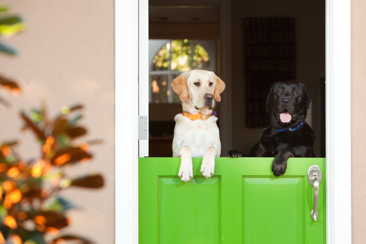 Dogs on Dutch Door