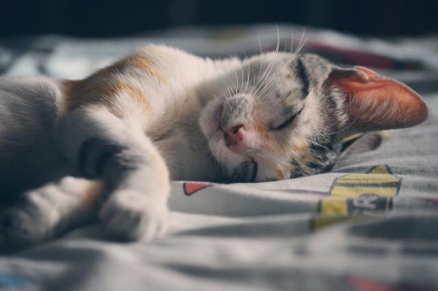 kitty_sleeps.jpeg