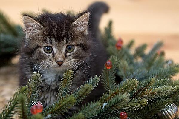 Use these tips to keep your pets out of the Christmas tree.