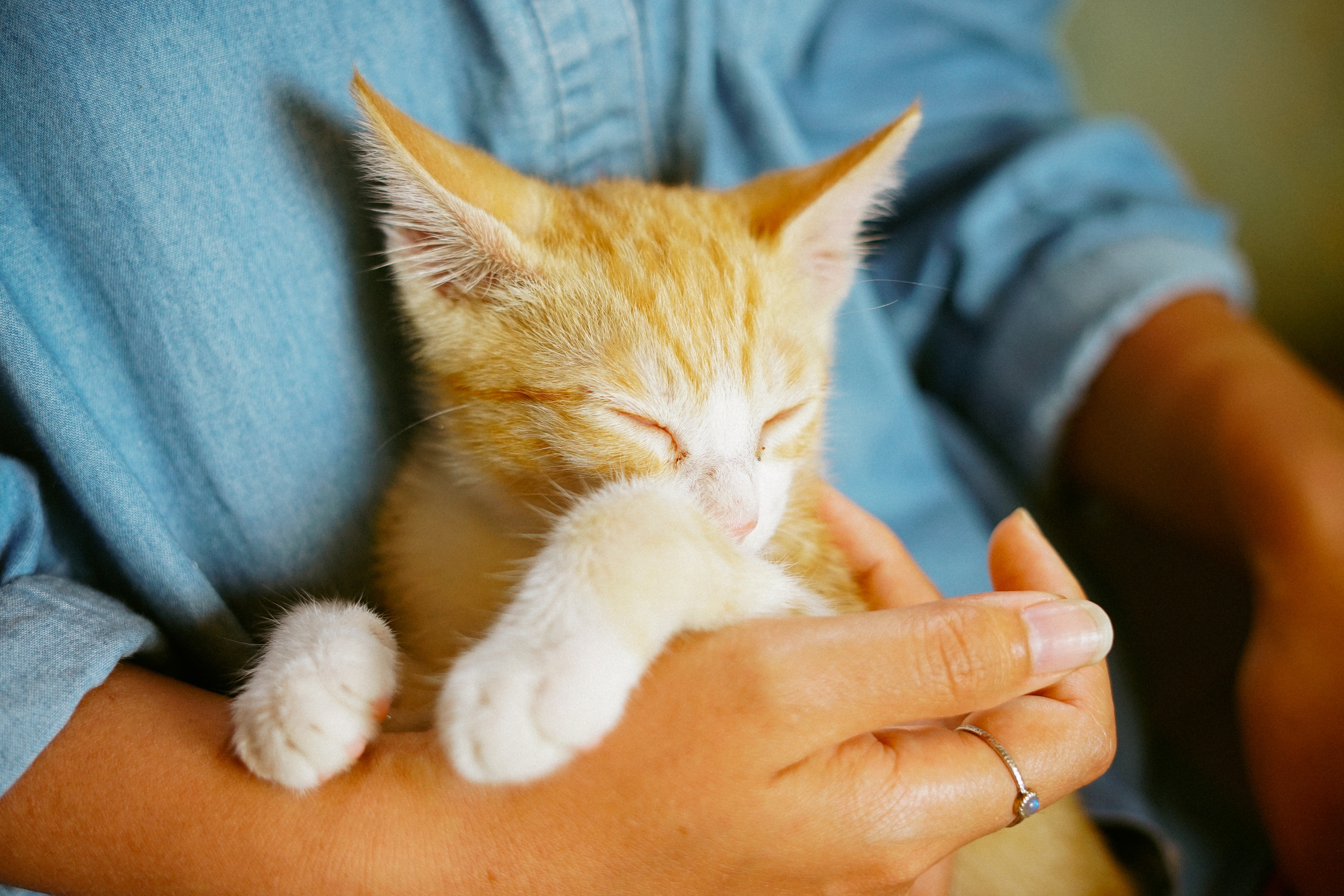 Moving with Pets: 5 Tips to Prepare