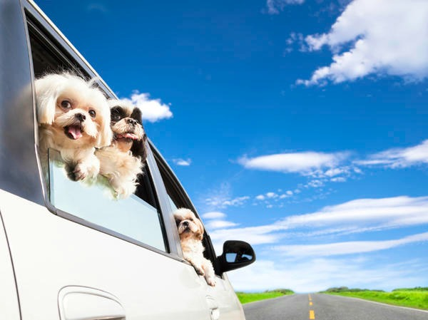 pets_in_car.jpg