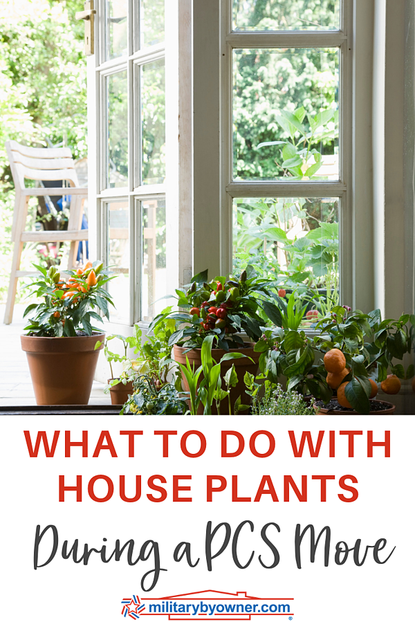 What to Do with House Plants During a PCS Move