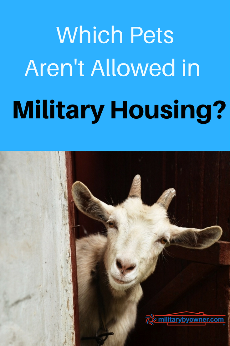 Which pets aren't allowed in military housing?
