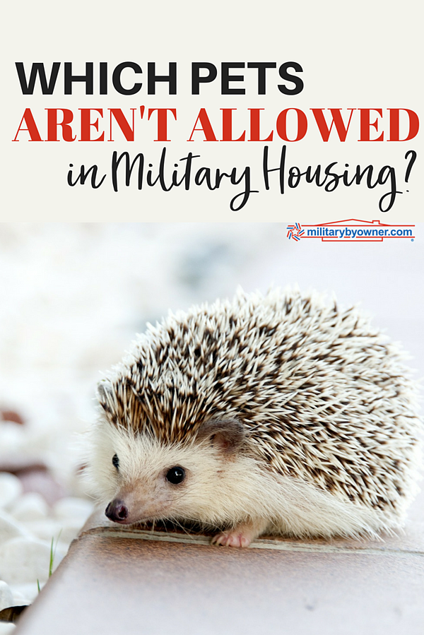 Which Pets Aren't Allowed in Military Housing