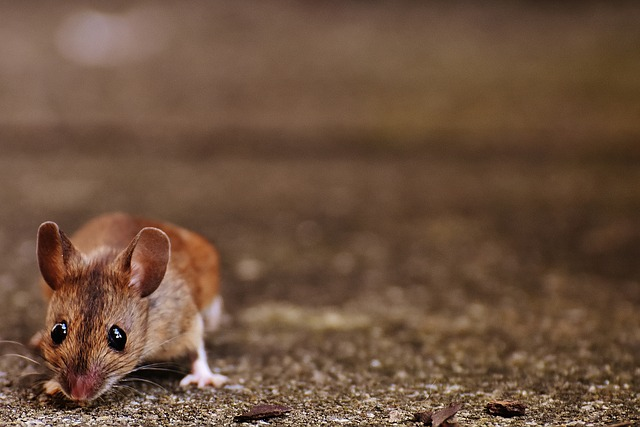 Check for pest entry points during winter home maintenance.