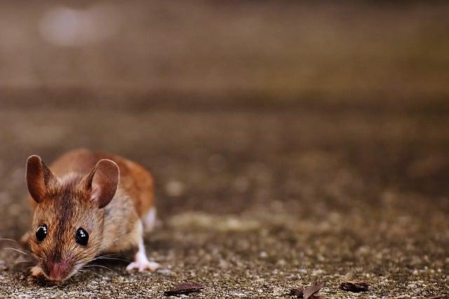 brown-mouse.jpg