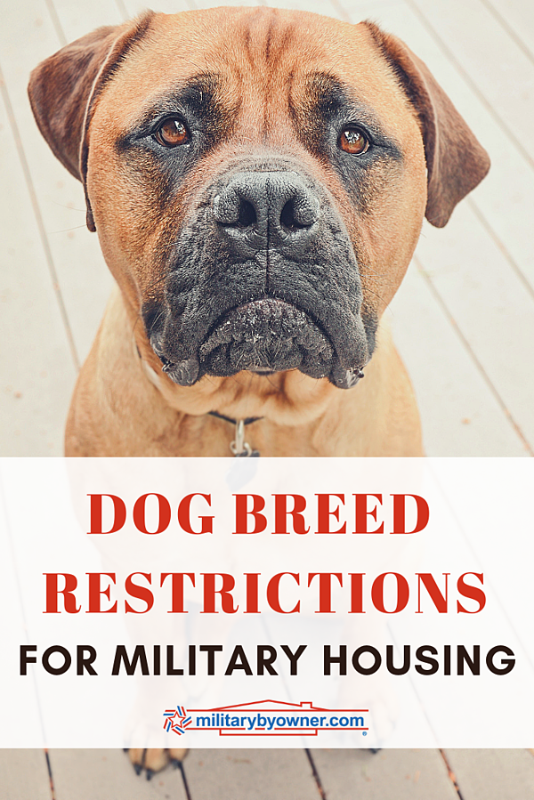 Dog Breed Restrictions for On-Base Military Housing