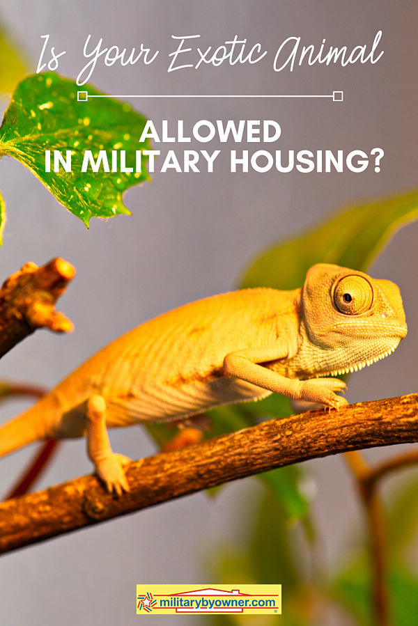 Is Your Exotic Animal Allowed in Military Housing_