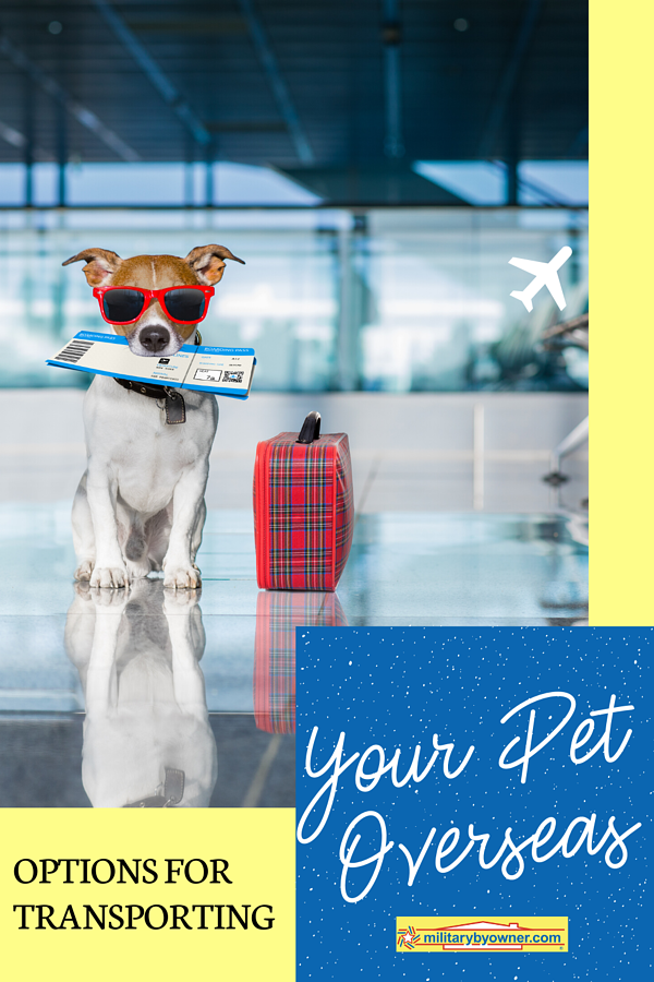 Transporting Your Pet Overseas