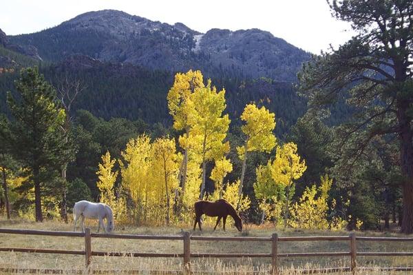 horses-1807488_1280