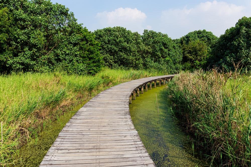 Walking path over the jungle.jpeg