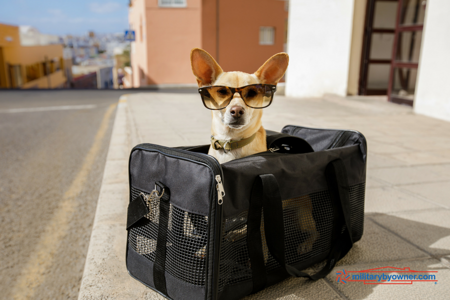 6 Resources for a Military Move with Your Pet