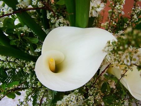 calla lily.png