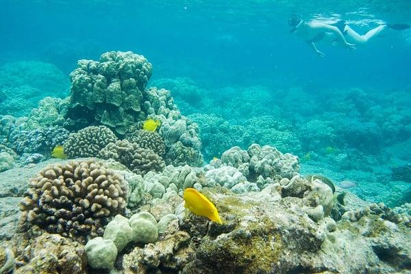 hawaii_island_snorkel