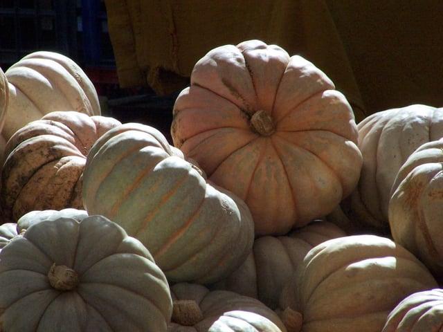 muted pumpkins.jpg