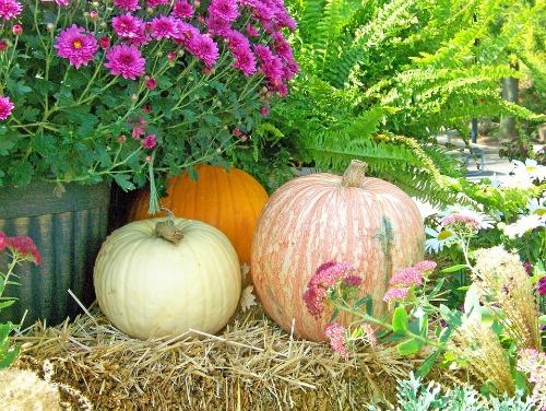 Cozy autumn inspiration.