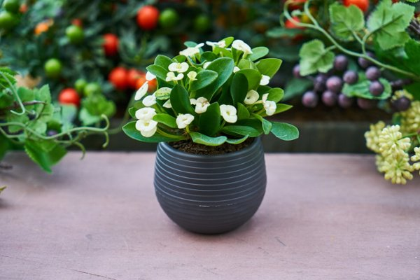 Ideas for Rehoming Your House Plants
