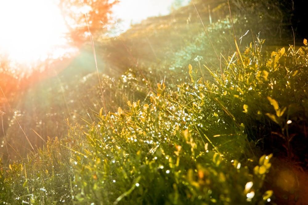 sunshine_flowers_bloom