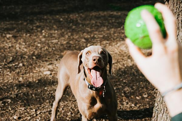 Dog park near Brandon, Florida