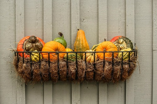 window_box_gourds.jpg