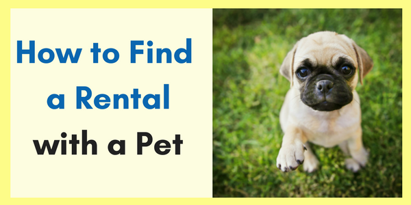 Tips for Finding a Rental Home with a Pet