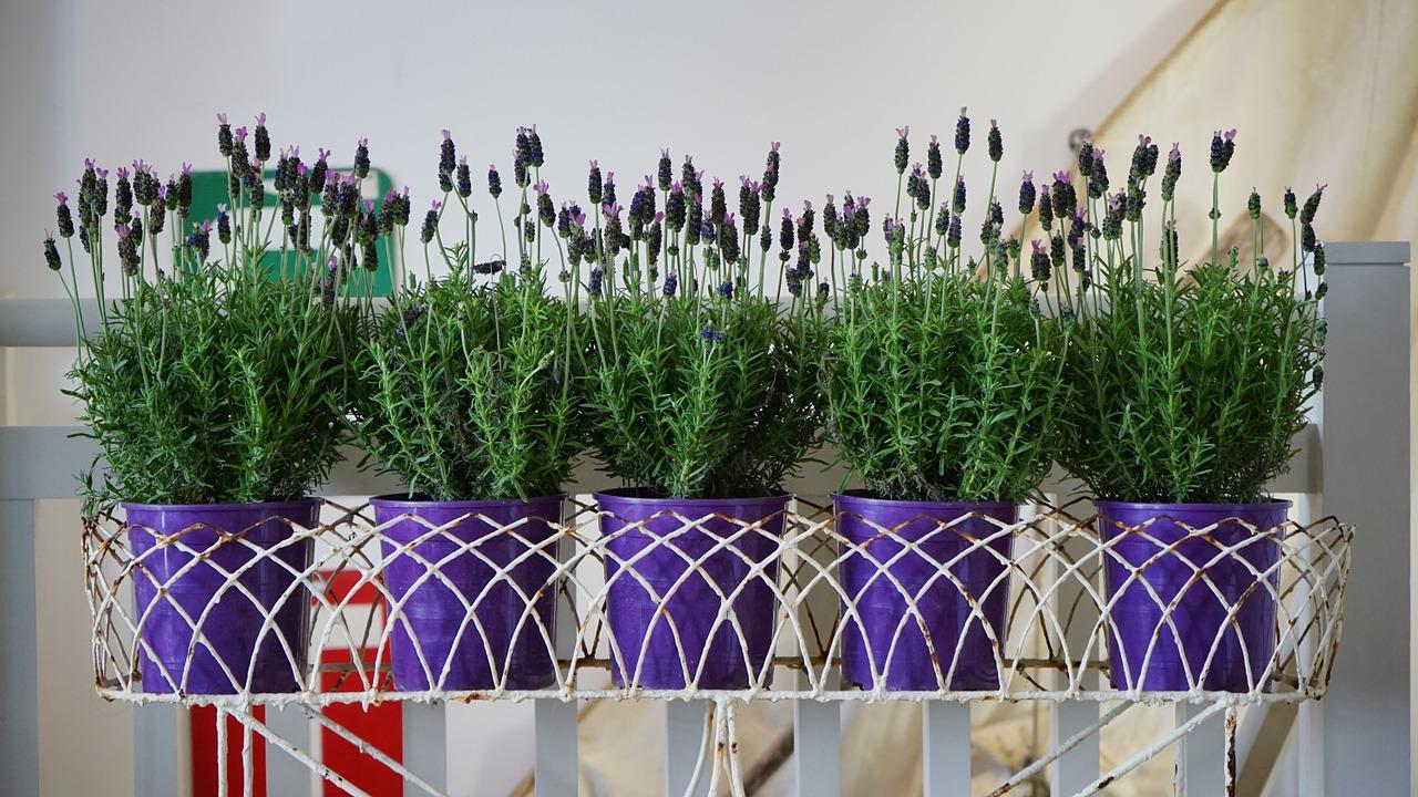plant-1438300_1280.jpg